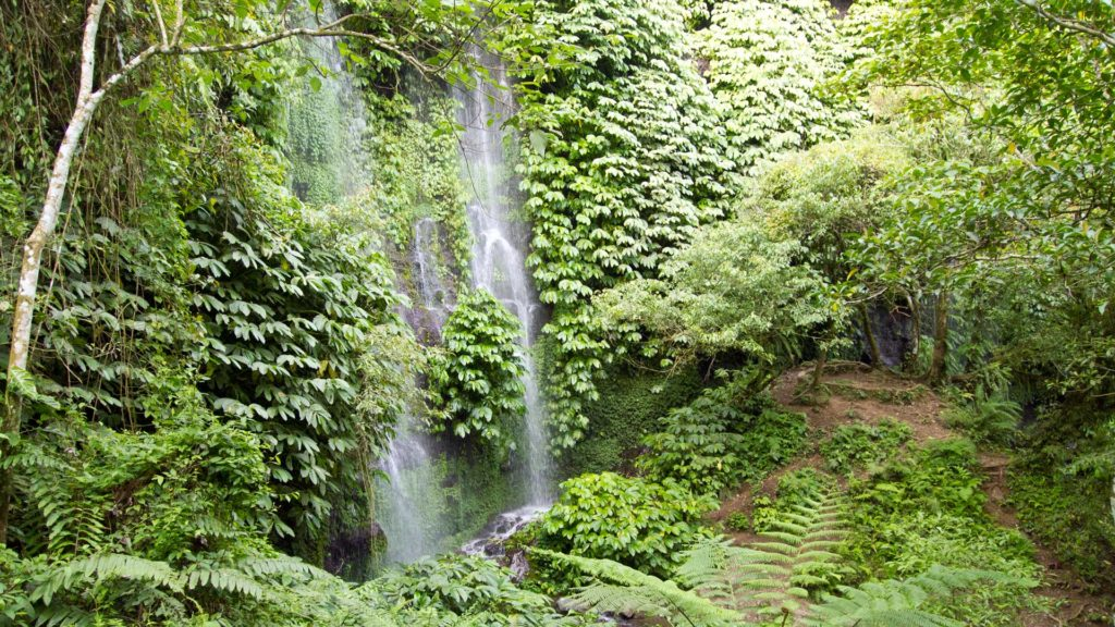 Jungle and waterfall in Lombok, Indonesia