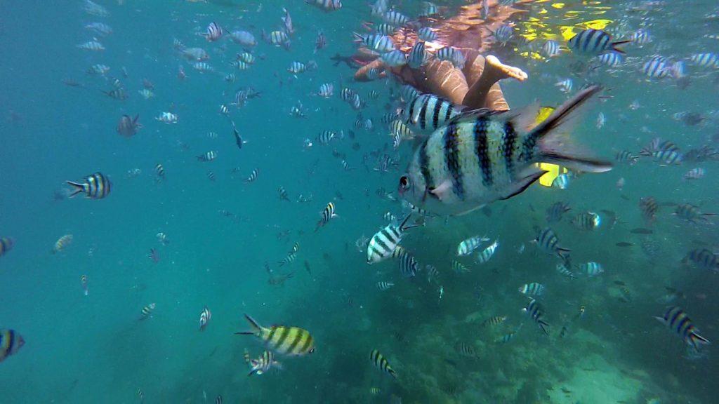 Fische im Wasser vor Koh Yak Lek