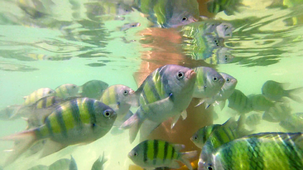 Many colorful fish in the water of Hong Island