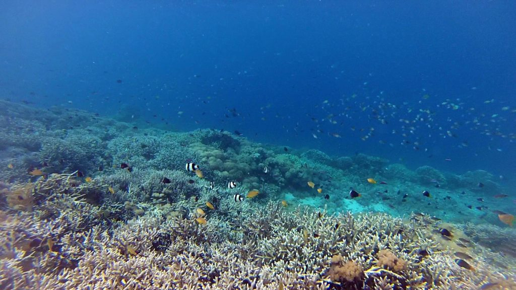 Underwater world off Gili Bidara, Lombok