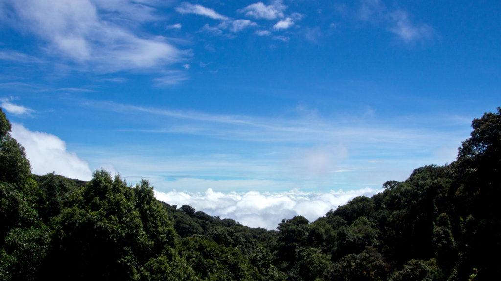 Above the clouds in Doi Inthanon National Park