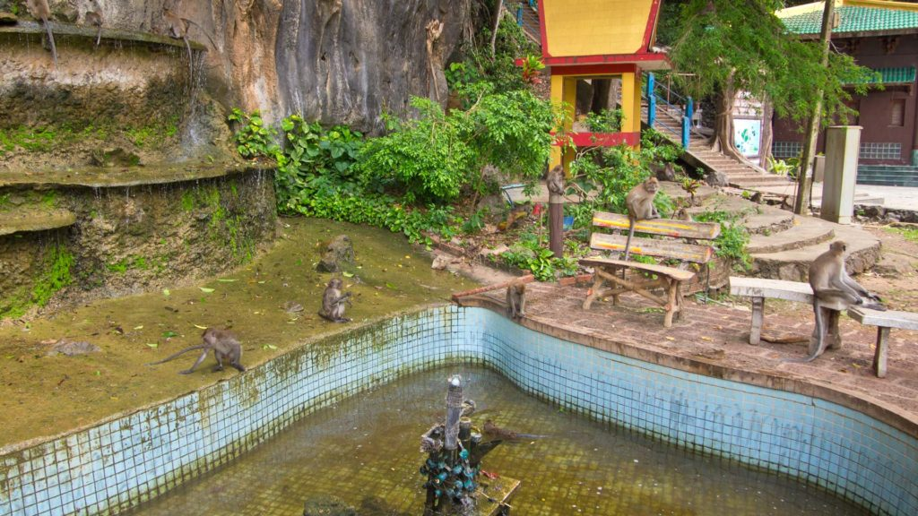 A monkey gang at the Tiger Cave Temple in Krabi