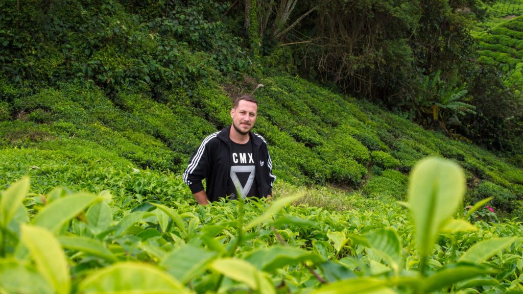 Tobi inmitten der Teeplantage Boh Tea in den Cameron Highlands