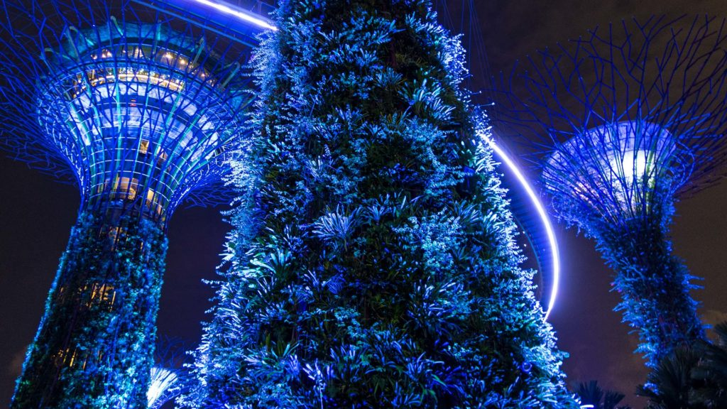 The illuminated Supertrees in the Gardens By The Bay at night