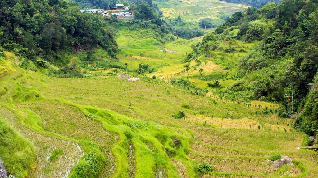 Nagacadan Rice Terraces viewed from Imbuliklik Rock, Kiangan (Philippines)