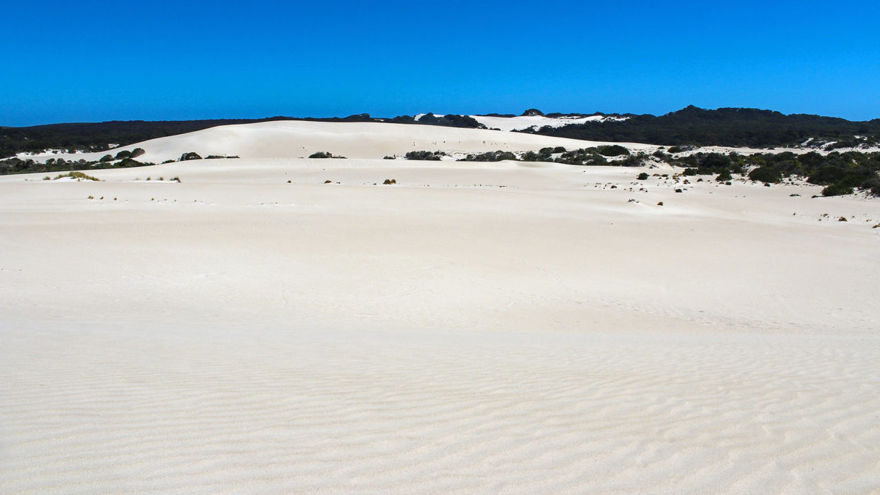 The dunes of Little Sahara on Kangaroo Island