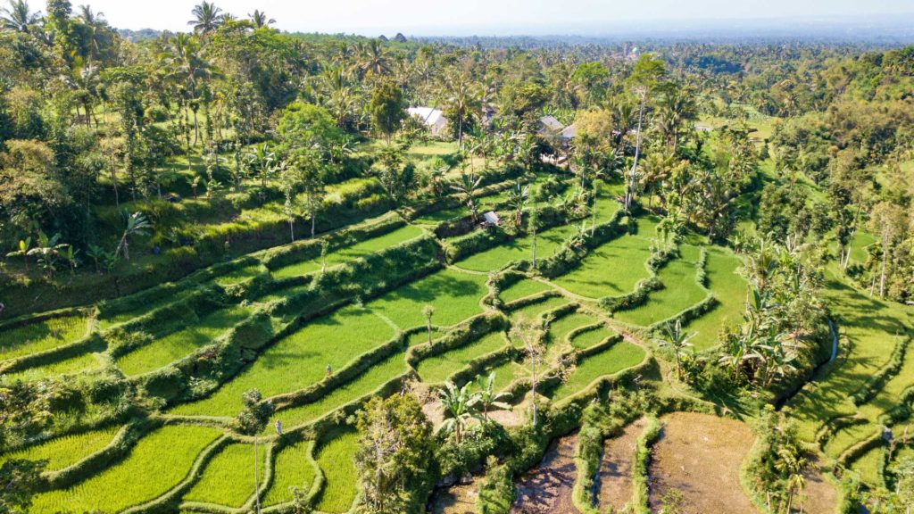 Rice terraces in Tetebatu, Lombok - taken with the drone