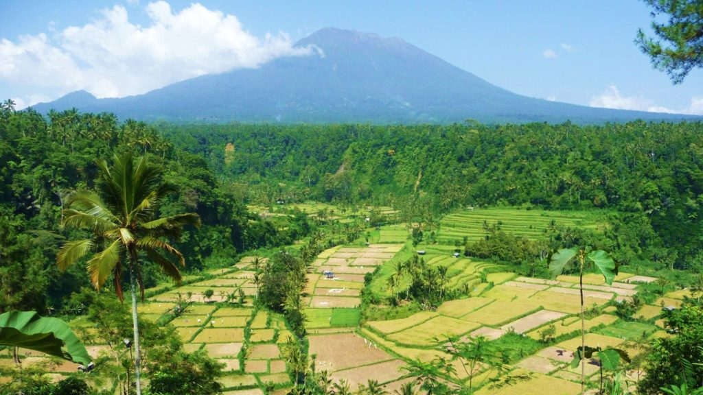 View of Mount Batur and green rice terraces in Bali