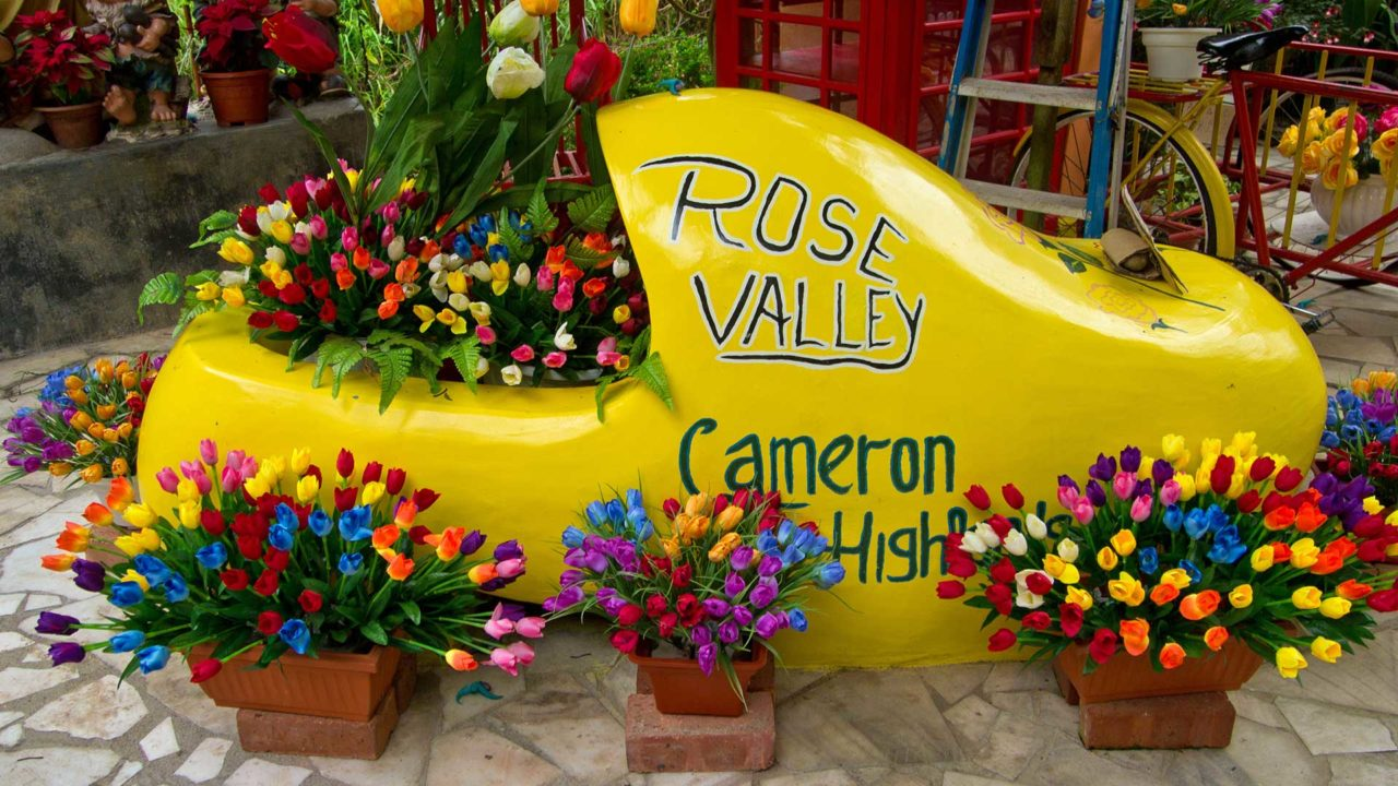 Das Rose Valley in den Cameron Highlands
