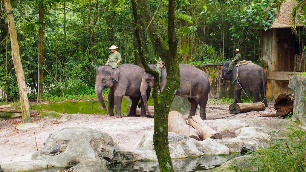 Elephants in the zoo of Singapore
