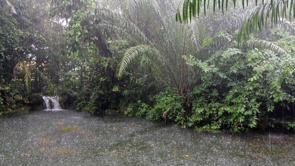 When the rain came in the Singapore Zoo