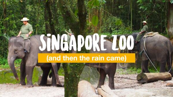 Singapore Zoo (and then the rain came)