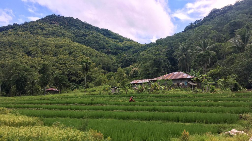 Rice fields and houses on the way to Wae Rebo