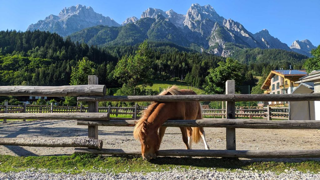 Horse in Leogang with the beautiful mountain panorama in the background